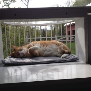 The Cat Solarium Penthouse Package Save $39.96