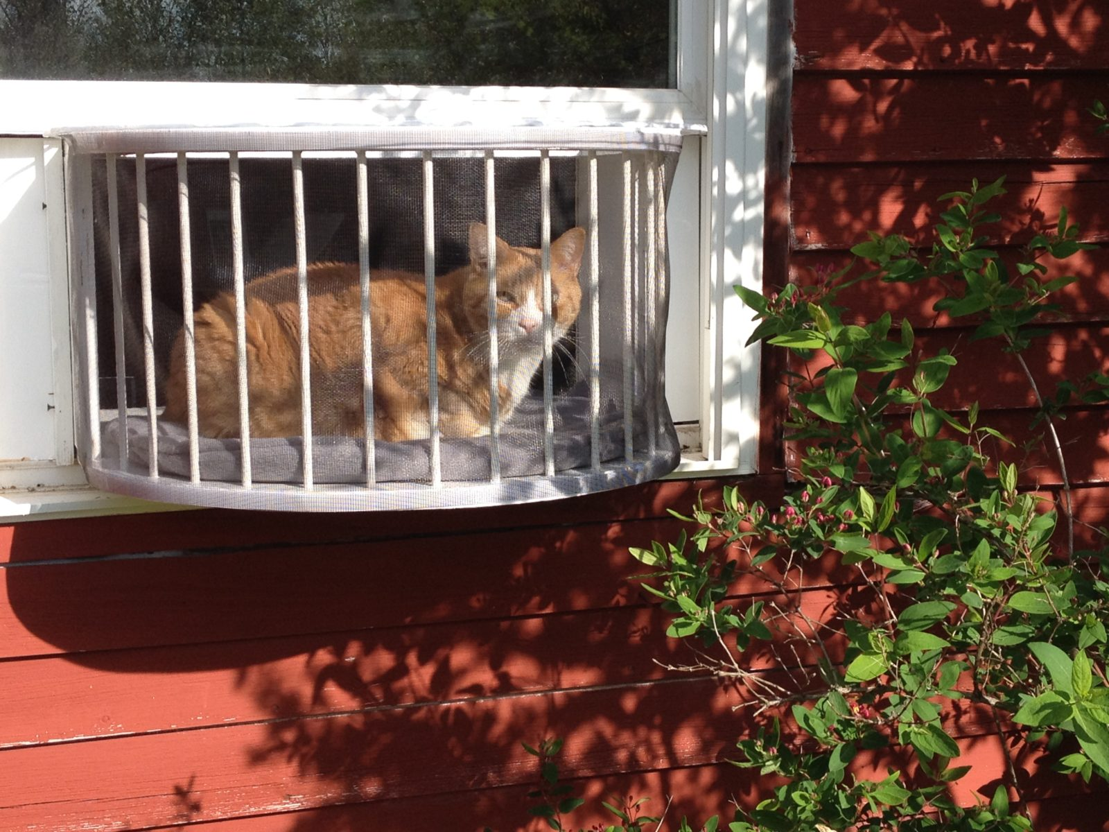 The Cat Solarium Conservatory Package For The Cat That