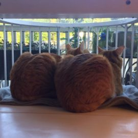 Another Raving Review For The Cat Solarium